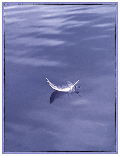 Water_Feather_Floating_New Zealand