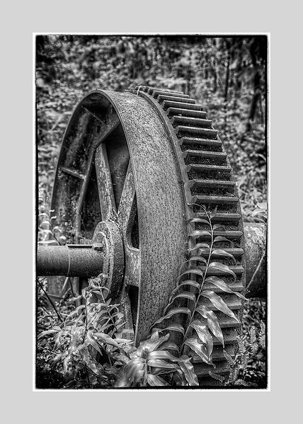 Cast Iron_Bush_Wheel_Coggs_Ferns_Axle