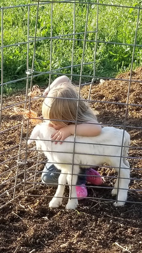 Mayzee and lamb.jpg