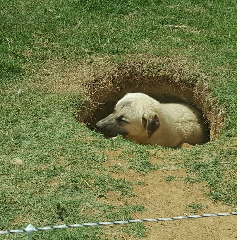 bandit in hole.jpg