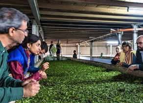 World Tea News: Mana Organics 'Not Just High-Quality, Ethical, Organic Teas'