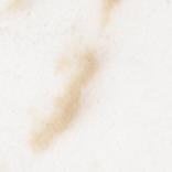 White/Beige