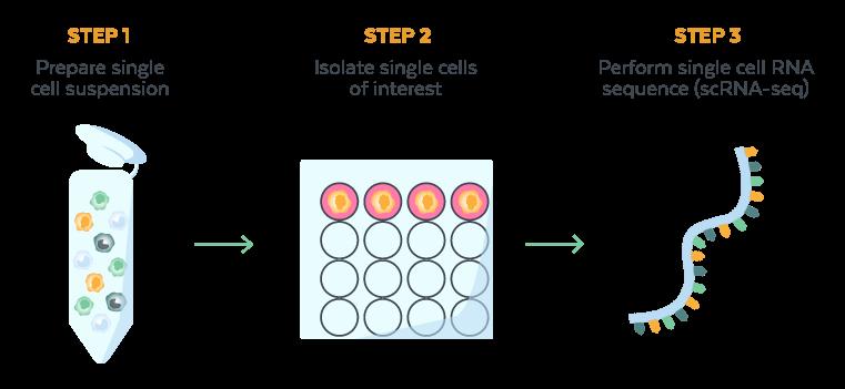 Genomics Workflow 2
