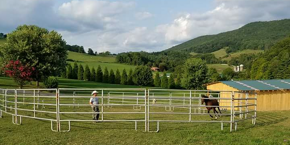 FREE HORSE CLINIC