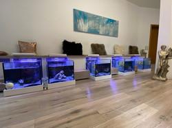 FishSpa Aquarien