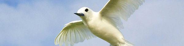 White Turn in flight