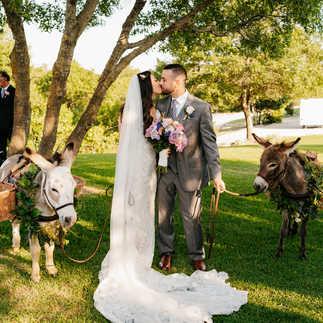 Wedding Donkeys
