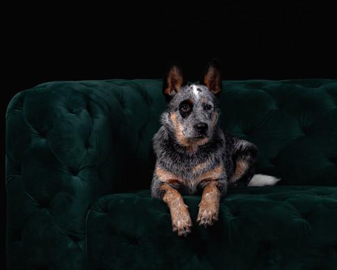 Dog shoot bearbeitet-4.jpg
