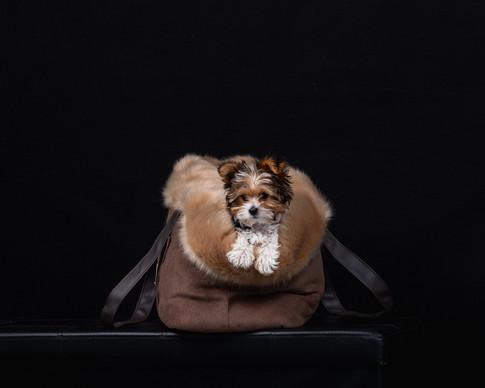 Dog shoot bearbeitet-19.jpg