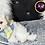 Thumbnail: Ren - Male | 9-Weeks Old | Biton