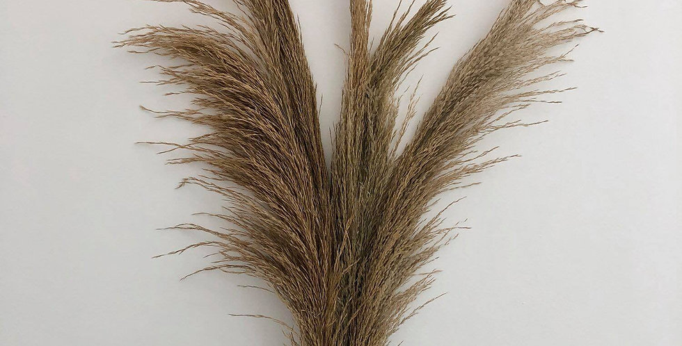 "50"" Dried Pampas Grass"