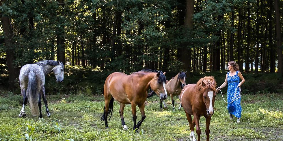 Opfriscursus Systemische Paardencoaches - Vrijdag 11 december 2020
