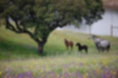 Horseconnection.nu.jpg