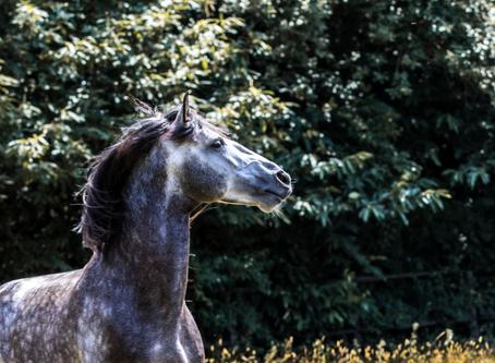 Lastige paarden bestaan niet, paarden die vastzitten in de emoties van de ruiter wel