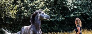 Lastige paarden bestaan niet, paarden die vastzitten in de emoties van de ruiter wel | Nuri.nu