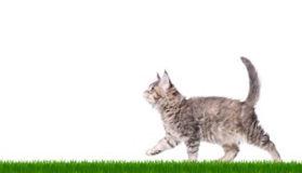 ネコ横コピー.jpg