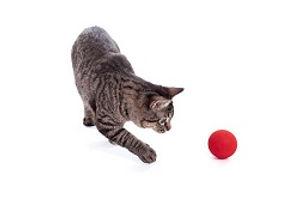 ネコとボールコピー.jpg