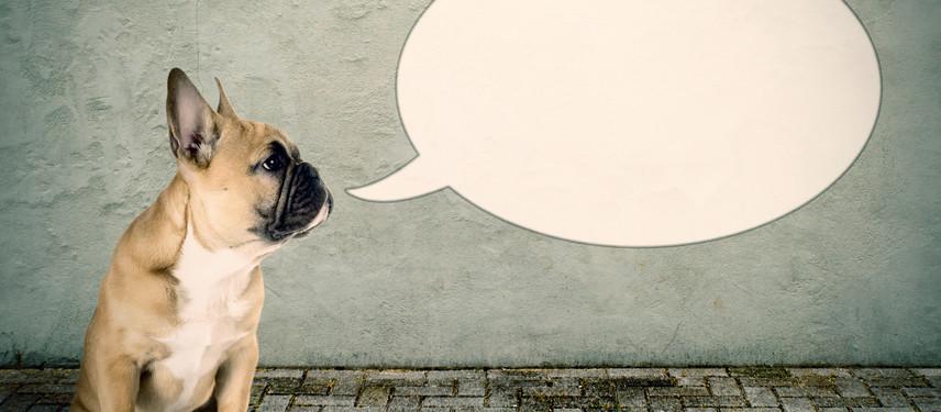 Speaking Your Team's Language