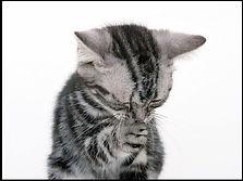 猫の祈り2.JPG