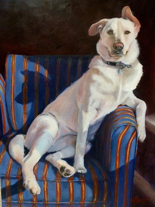 Single Dog Portraits