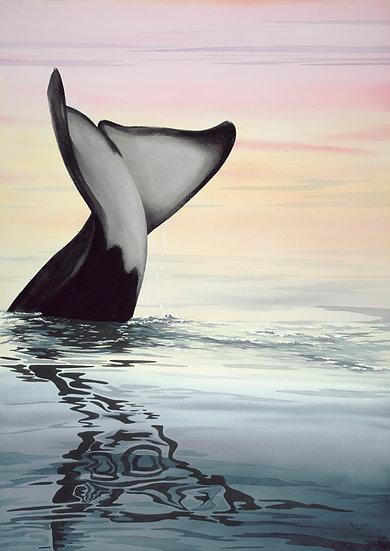 AW1 - Whale Play
