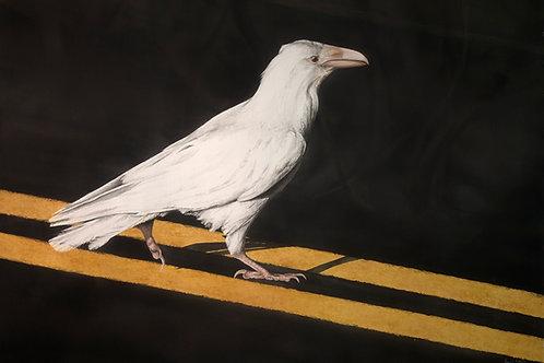 AW20 - White Raven