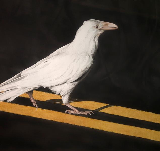 """AW20  """"White Raven"""""""