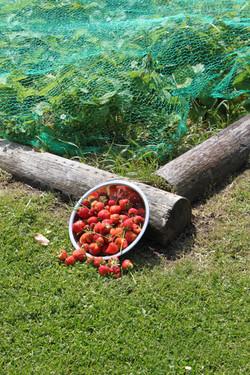 Strawberrieshalfsize.jpg