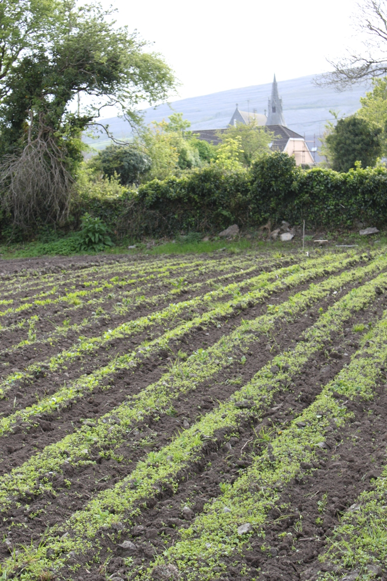 Food Producers.jpg