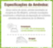 Especificações da amêndoa de cacau
