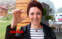 bahar4
