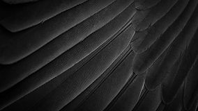 wings-feathers-background.jpg