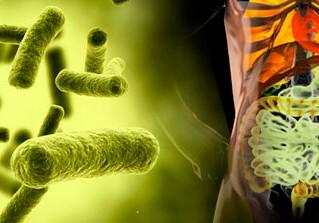 ¿Las bacterias del intestino escogen lo que comemos?