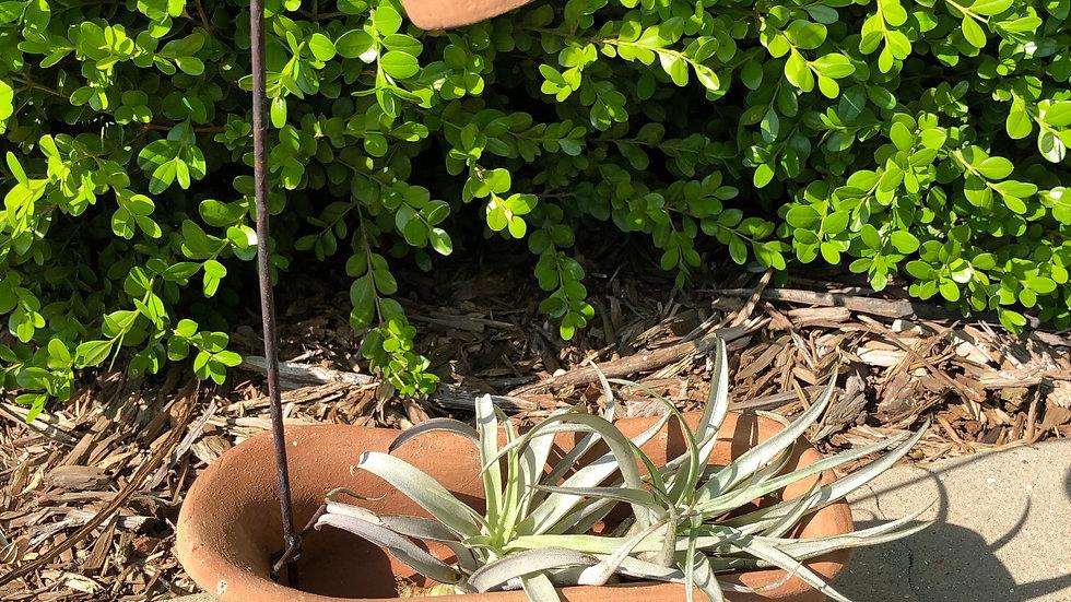 Terracotta Bathtub Planter w/saucer