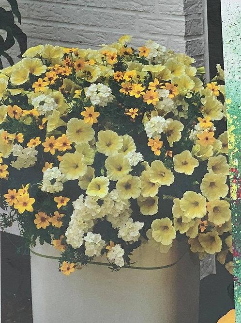 """Mixed bloom 12"""" hanging basket"""