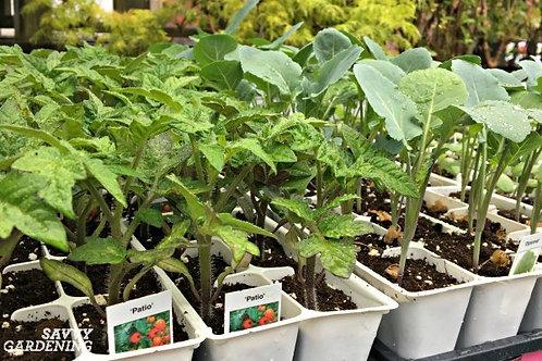 Home Veggie Garden Kit