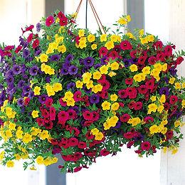 Hanging Baskets & Planters