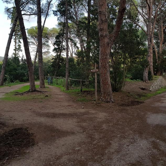Fine Forestale Lato Ansedonia