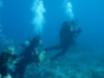 cours Dive Master Montreal