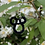 Thumbnail: Mickey Earrings