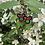 Thumbnail: Minnie earrings