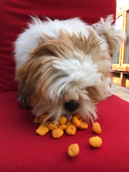 pop-corn-pou-chien-2.jpg