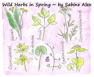 Wild Herbs Image.png
