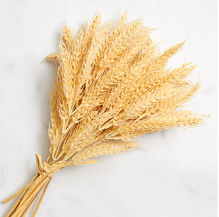 Wheat omer image.png
