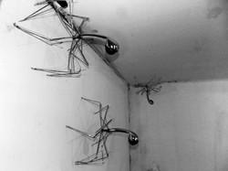 Arachnoids S33