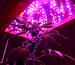 GREEN GROW 300W REPLACES 1000W HID