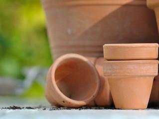 The Great Flower Pot Battle