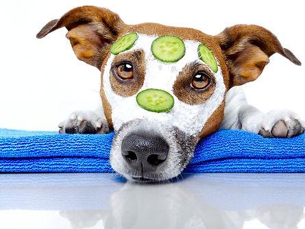 Dog-With-A-Beauty-Mask-33362396.jpg