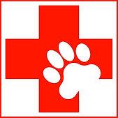 dog-first-aid.jpg
