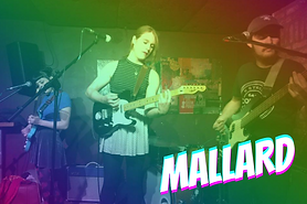 Mallard ShelterFest Web Image.png